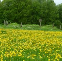 1 Limes Germanicus Rheinland-Pfalz Limeswachturms Wp 1-12