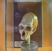 1.2. Paléolithique Inférieur Pleistocène Moyen Homo Heidelbergensis Tautavel Crane