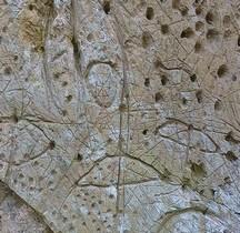 Age Bronze Ancien Les Pétroglyphes Peyro Escrito Olargues