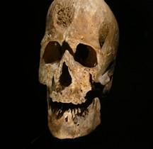 1.4 Paléolithique supérieur Homo Sapiens Type Cro Magnon Paris MH