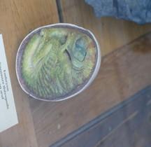 2.3.6 Crétacé Final Maastrichtien Tyrannosaurus Oeuf Copie Paris MHN