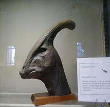 2.3.5 Crétacé Superieur Campanien Parasaurolophus Paris MHN