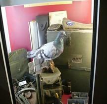 Pigeon Container PG-51 Airborne Bastogne