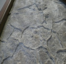 2.1.1 Trias Inférieur Cheirotherium Empreintes Paris MHN