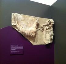 Rome Draco Bas Relief Trèves