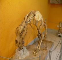 1.2. Paléolithique Inférieur Pleistocène Moyen Ursus Deningeri Tautavel