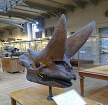 3.5 Oligocène Arsinoitherium Zitelli Paris MHN