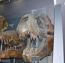 2.3.6 Crétacé Final Maastrichtien Tyrannosaurus Rex Londres