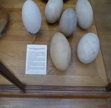 1.2. Paléolithique Inférieur Pleistocène Moyen Aepyornis Maximus Oeufs Paris