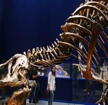2.3.6 Crétacé Final Maastrichtien Tyrannosaurus Rex Trix Paris 2018