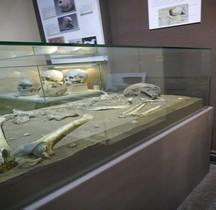 2.1 Néolithique Ancien Cardial Grotte Castellar Alpes Maritimes Menton
