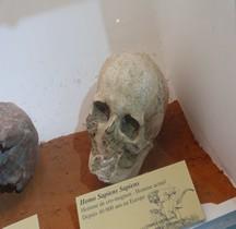 1.4 Paléolithique supérieur Homo Sapiens Type Cro Magnon
