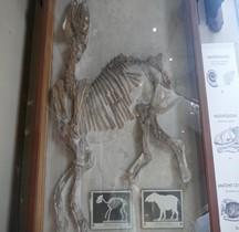 3.2.2 Eocène Moyen Paletherium magnum Paris MHN