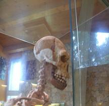 1.2. Paléolithique Inférieur Pleistocène Moyen  Homo Heidelbergensis Tautavel