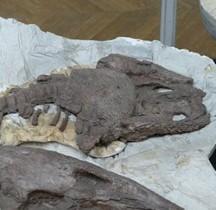 2.1.3 Trias Superieur Dutuitosaurus Ouazzoui Paris MHN