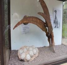 2.3.6 Crétacé Final Maastrichtien Therizinosaurus Mèze