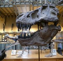2.3.3 Crétacé Final Maastrichtien Tyrannosaurus Rex Paris