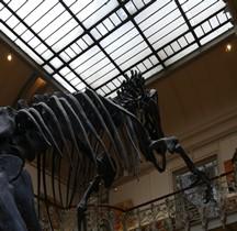 2.2.3.Jurassique Supérieur Allosaurus Fragilis Paris