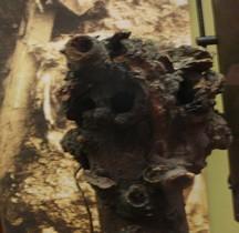 1°GM Camouflage Périscope Bruxelles