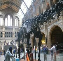 2.2.1 Jurassique Ancien Diplodocus Londres