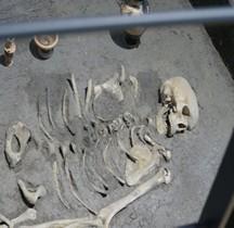 6 Etrusques Nécropole Commachio Sépultures à Inhumation  Comacchio Delta Antico