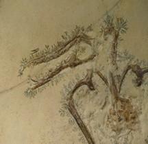 2.2.3.Jurassique Supérieur Rhamphorhynchus Muensteri Paris