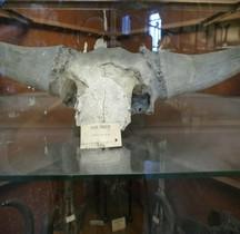 1.4.1 Paléolithique supérieur Aurignacien Bison Priscus Mediator Paris MHN