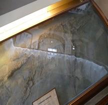 2.2.1 Jurassique Ancien Ichthyosaurus Quadriscissus  Paris MHN