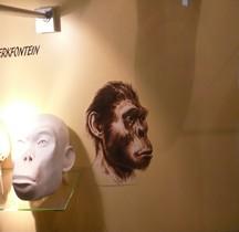 0.3 Pliocène Supérieur Australopithecus africanus Sterkfountain Bruxelles