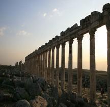 Syrie  Apamée-sur-l'Oronte