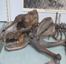 1.2. Paléolithique Inférieur Pleistocène Canis Dirus Paris