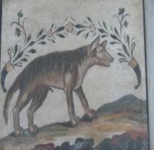 Mosaïque Rome Italie Rome Loup Corne Abondance Vatican