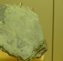 1.4.1 Paléolithique supérieur Aurignacien Gravure  Grotte Chien Piechelet SGL MAN