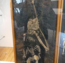3.4 Miocène Pierolapithecus Catalaunicus Paris MH