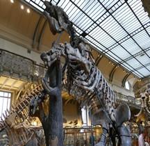4.1.1 Quaternaire Pleistocène Inferieur Megatherium Americanum Paris