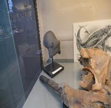 3.4.3 Miocène Supérieur Odobenocetops Paris MHN