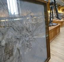 2.2.1 Jurassique Ancien Ichthyosaurus Tenuirostris Paris MHN
