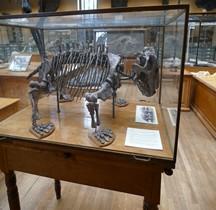 2.1.3 Trias Inférieur Lystrasaurus Murrayi Paris