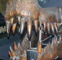 2.3.2 Crétacé Moyen Sarcosuchus imperator Londres