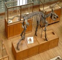 1.4.1 Paléolithique supérieur Aurignacien Rhinocéros Laineux Coelodonta Antiquitatis  Paris MHN