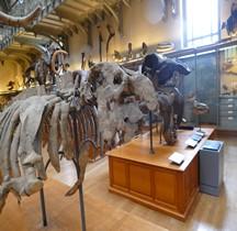 3.4 Miocène Metahythrium Cuvieri Paris MHN