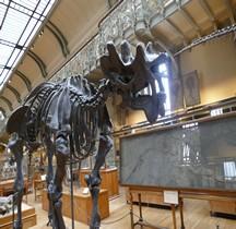 3.2 Eocène Uintatherium Paris MHN