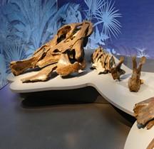 2.3.6 Crétacé Final Maastrichtien Edmontosaurus  Paris Museum Histoire Naturelle