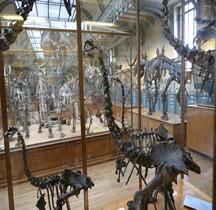 1.2. Paléolithique Inférieur Pleistocène Moyen Anomalopteryx Didiformis Paris