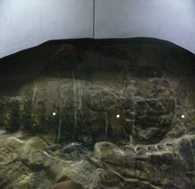 1.4.1 Dévonien Ancien Pterygotus Anglicus Devonien Londres