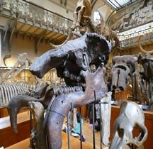 3.4 Miocène Denotherium Giganteum Paris MHN