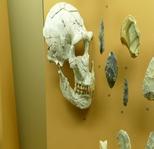 1.3.3 Paléolithique Moyen Homo Sapiens Neanderthalensis  Chastelperronien Pierrette Homme  St Cesaire SGL