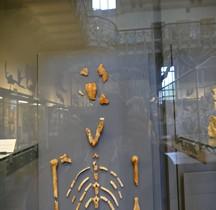 0.3 Pliocène Supérieur Australopithecus afarensis Lucy Squelette Paris